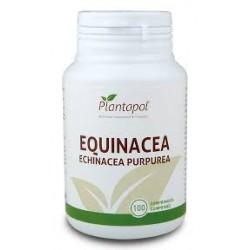 Equinacea (Echinacea Purpurea) Plantapol 100 comprimidos